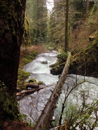 Those switchbacks always leave me winded, but I never tire of the trail to Weisendager and Ecola falls.